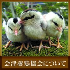 会津養鶏協会について